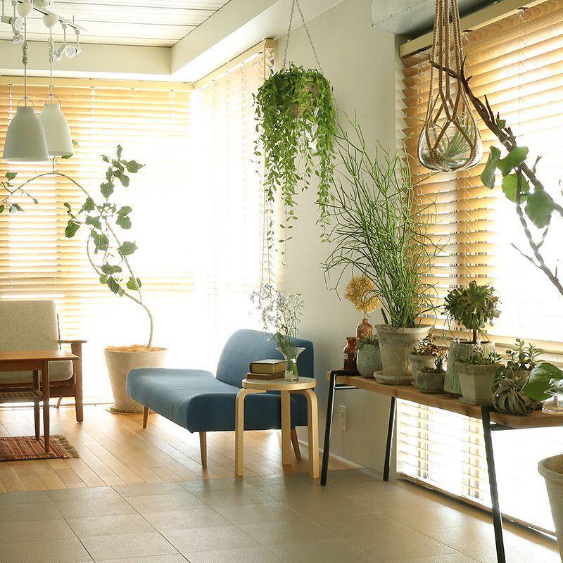 一人暮らしのインテリアとコーディネートの決め方: インテリアにグリーンを取り入れよう。|Re:CENO Mag