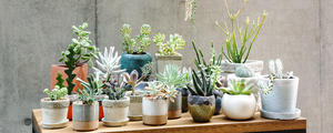 多種多彩!華やかで個性豊かな「多肉植物」の魅力と楽しみ方をご紹介します!