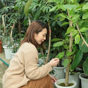 植物買い付けレポート!上質なコーディネートに必要不可欠なグリーンを選んできました♪