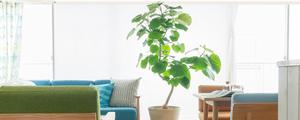 【動画】お部屋にあう観葉植物の選び方をご紹介します。