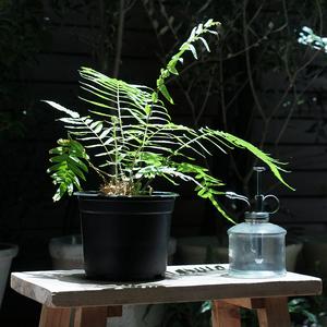 「植物を育ててみたいけど、ちょっと不安、、」初心者の方へのワンポイントアドバイス集♪