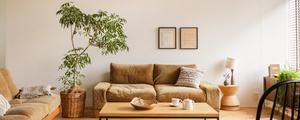 【動画】お部屋をぐっとセンス良く見せる「シンボルツリー」の飾り方
